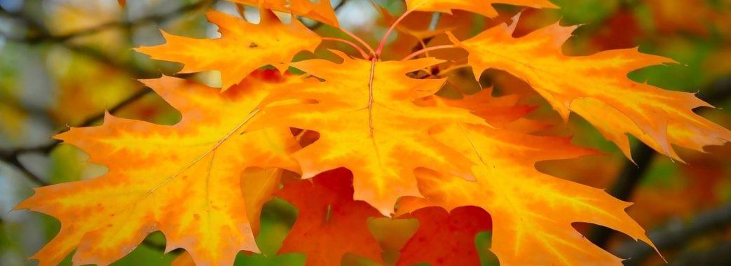 Чим потішить жовтень: погода