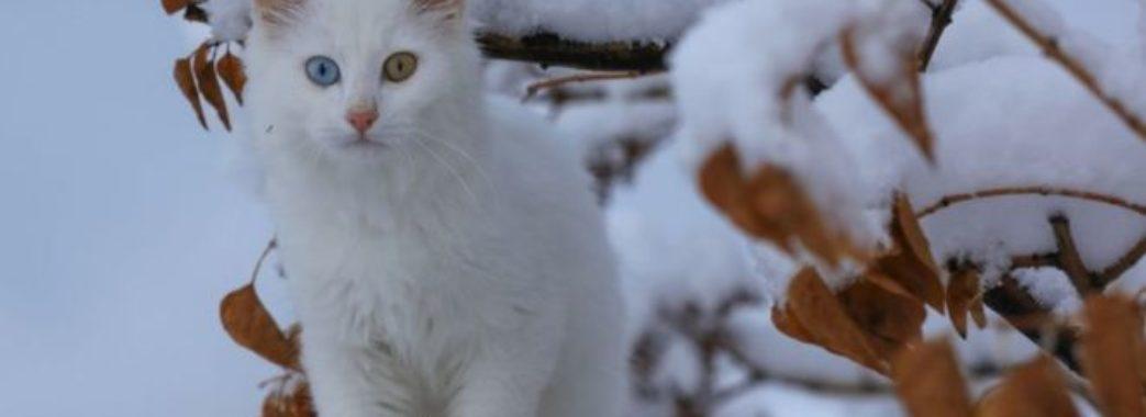 Дочекались.Перший сніг на Львівщині (відео)