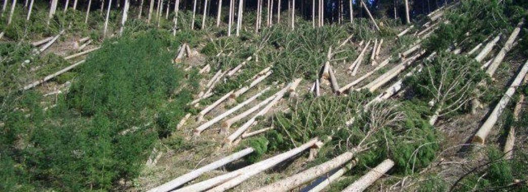 Винних за незаконні рубки лісів 2017 знайдуть аж у 2019?