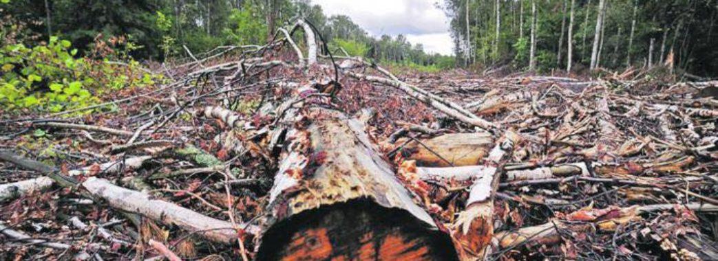 Поки депутати дискутують, ліси вирубують