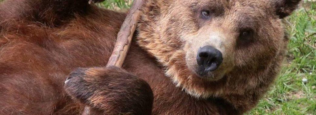 Сьогодні – день усмішки. Привітання від ведмедів (фото)