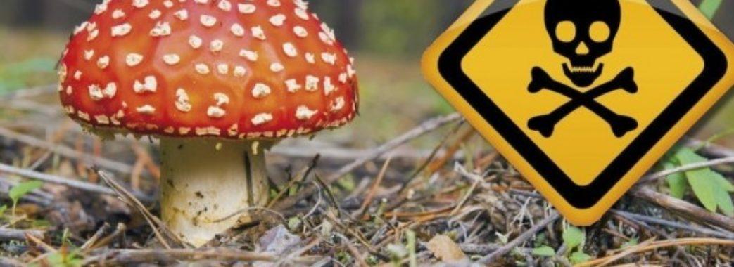 Троє людей отруїлись грибами, потрібні донори