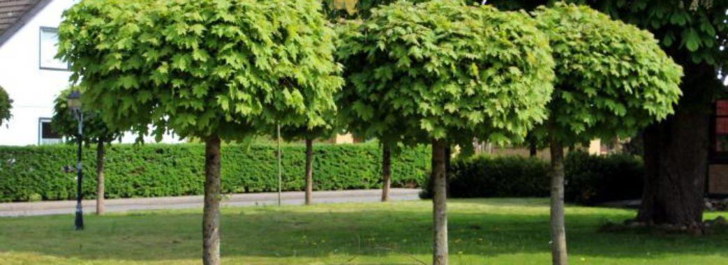 У Львові садитимуть дерева. Потрібна допомога