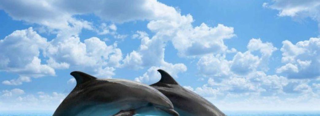 Дельфіни не лікують, – Супрун