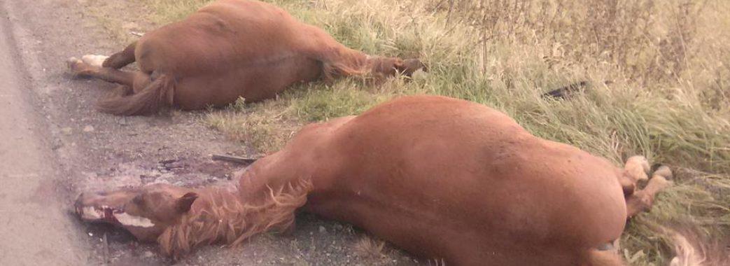 Поблизу Дрогобича водій збив на смерть двох коней