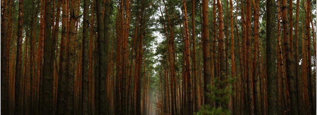 Президент підписав Закон щодо збереження українських лісів