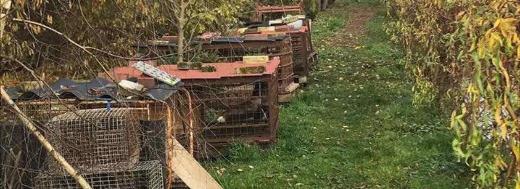 Депутата Лапаївської сільради звинувачують у живодерстві