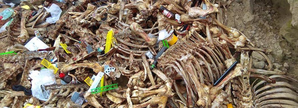 На Жовкіщині виявили ще один скотомогильник