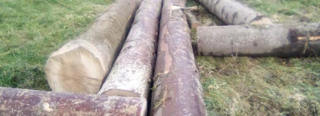 На Старосамбірщині місцеві мешканці обурені діями лісників