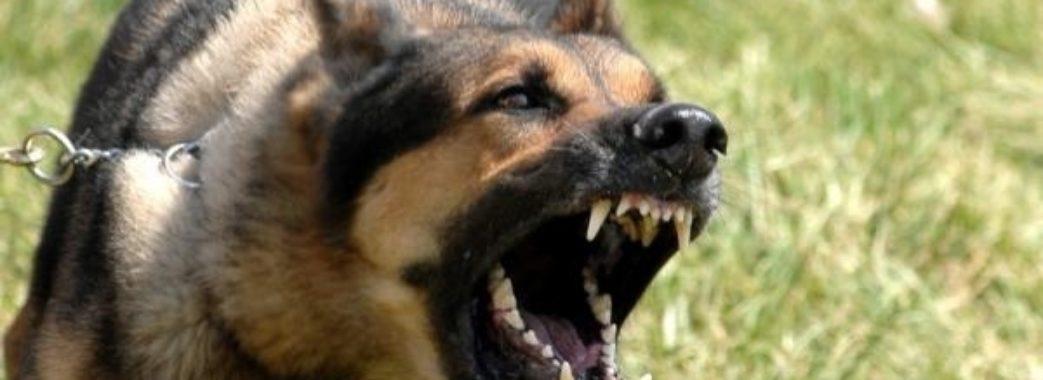 Померла жінка, яку собака заразив сказом
