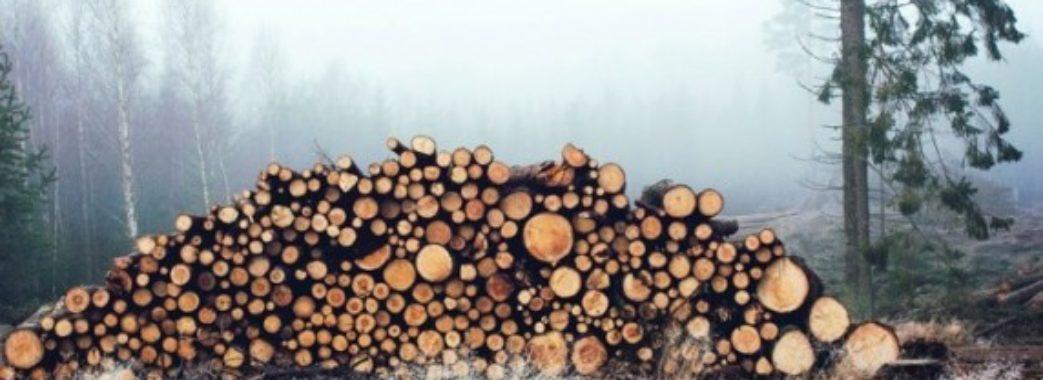 У лісі на Турківщині вирубують здорові дерева