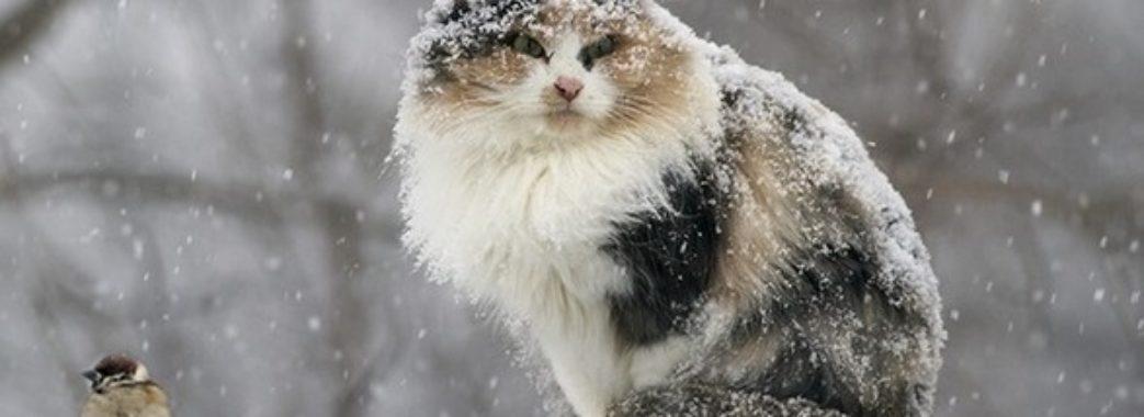 Мокрий сніг, туман та ожеледиця – погода на вихідні