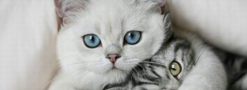 """ЛКП """"Лев"""" проведе акцію зі стерилізації домашніх котів"""