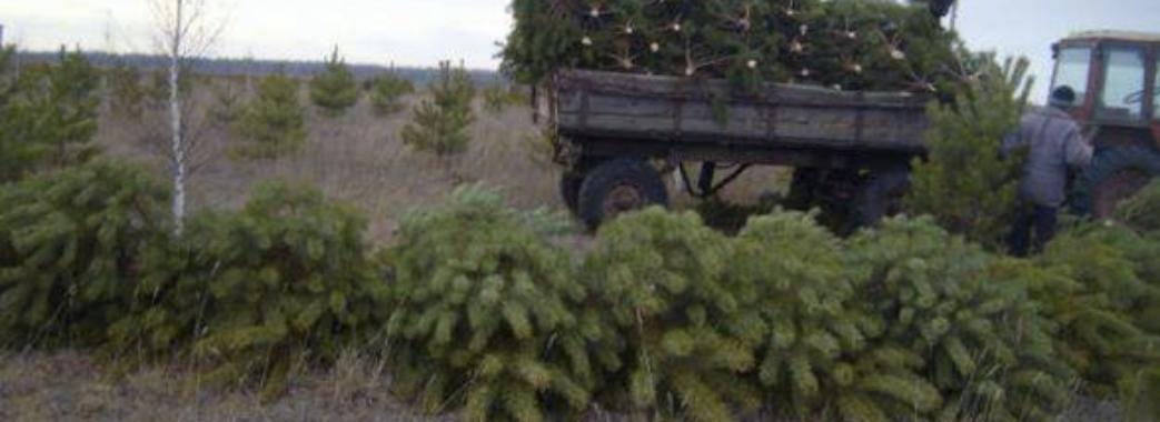 На Старосамбірщині знову затримали автомобіль з ялинками