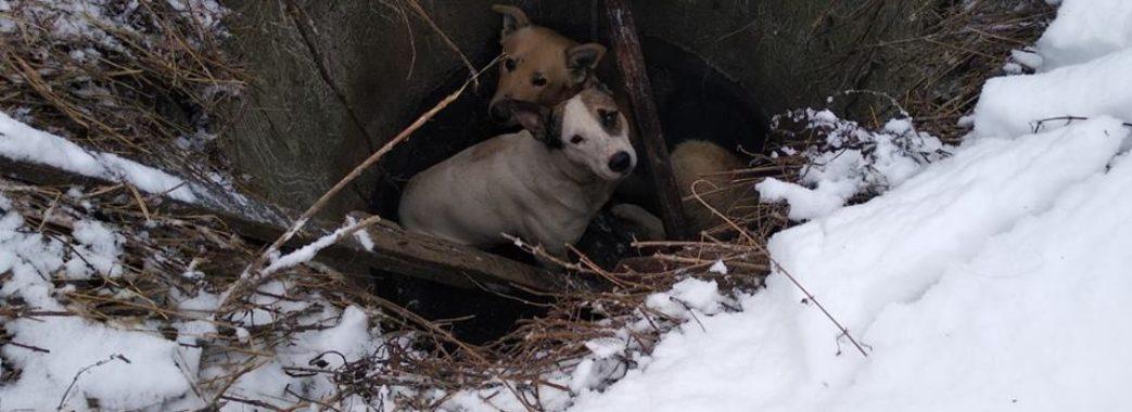 Рятувальники витягнули собак із колодязя