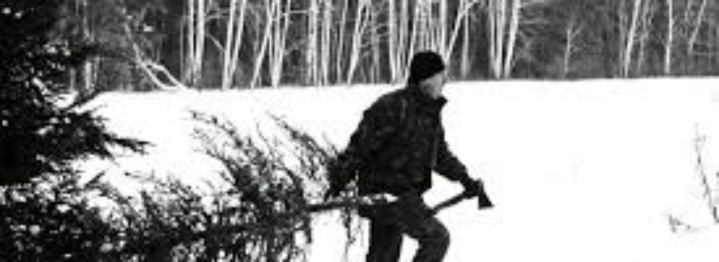 Чоловік з Радехівщини зі сусідського подвір'я поцупив ялинки