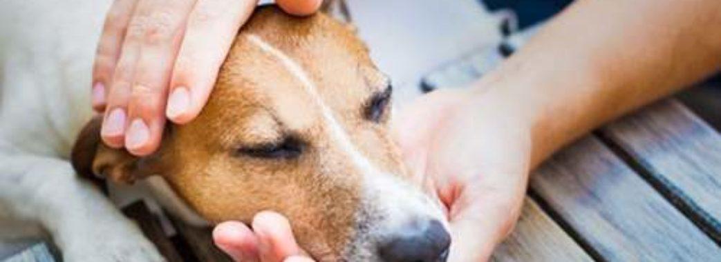 Ветерани АТО збирають кошти на банк крові для собак