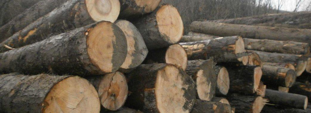 """На Старосамбірщині виявили пилораму """"Галсільлісу"""", яка працює незаконно, та велику кількість продукції, заготовленої з порушенням"""