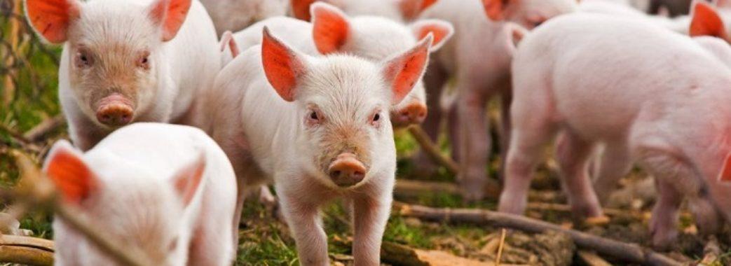 Мешканці Кам'янки-Бузької не дозволяють збудувати свинокомплекс