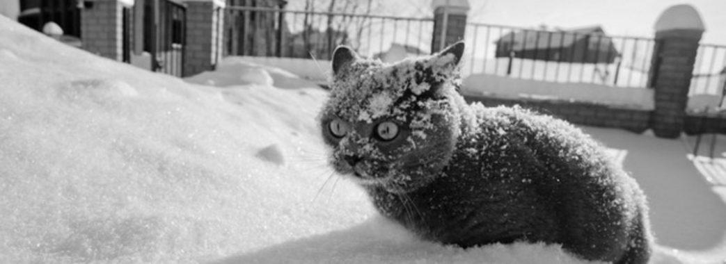 На Львівщину йде похолодання