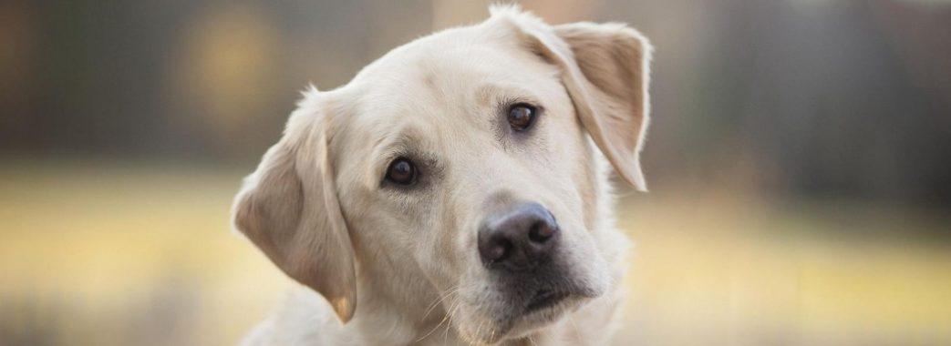 На Сколівщині судитимуть жорстокого вбивцю собаки