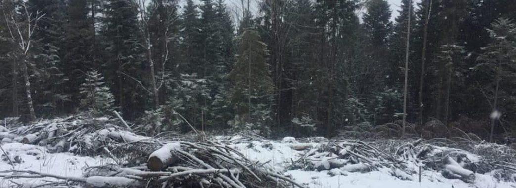 """""""Те, що лісу вирубується наполовину менше, – неправда», – громадського активіста обурив звіт Олега Синютки"""