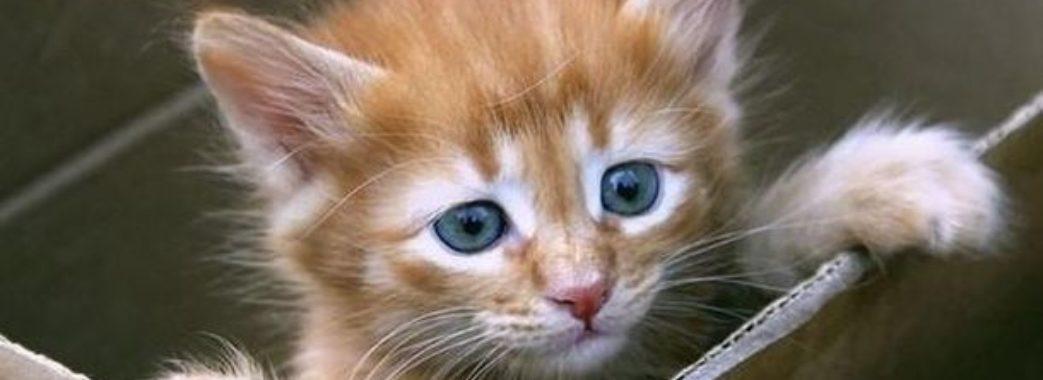 У Львові поліція розшукує підлітків, які викинули кошеня з багатоповерхівки