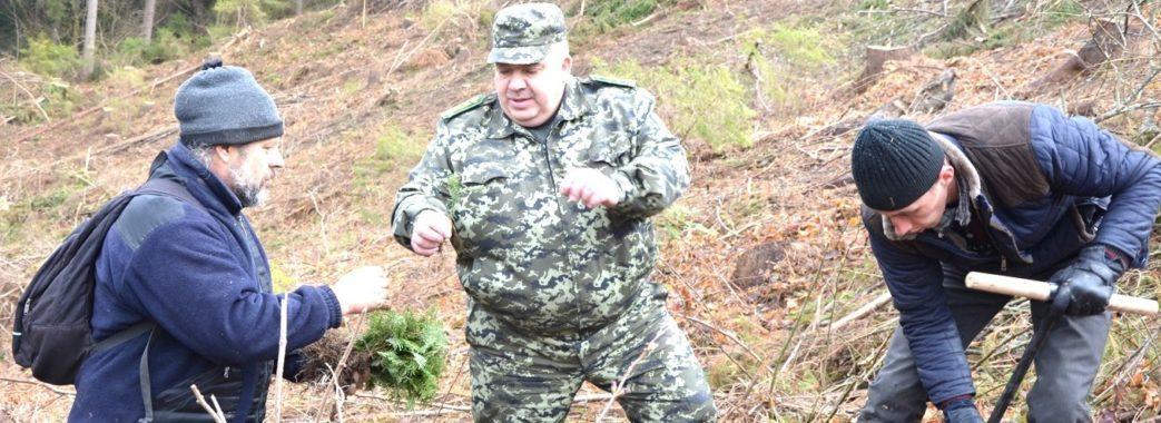 За незаконну вирубку лісу депутата Турківської райради оштрафували на 5,2 млн гривень