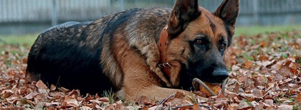 Сколівський суд звільнив від відповідальності вбивцю собаки