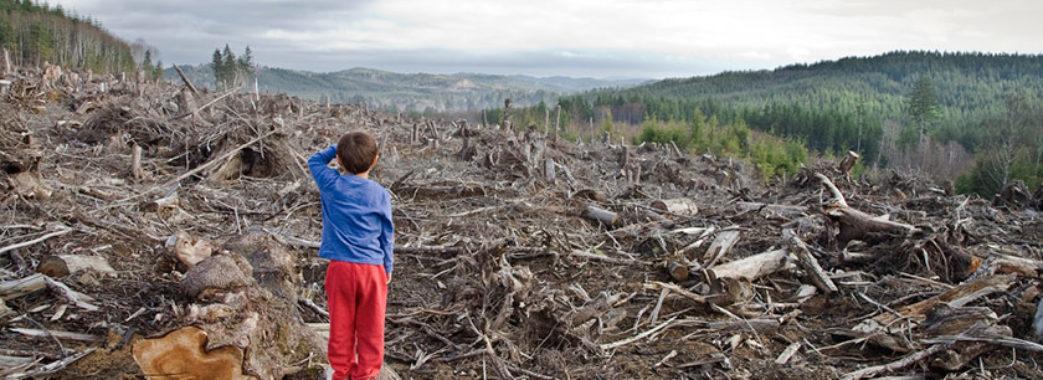 За незаконну вирубку лісу можуть посадити на 7 років