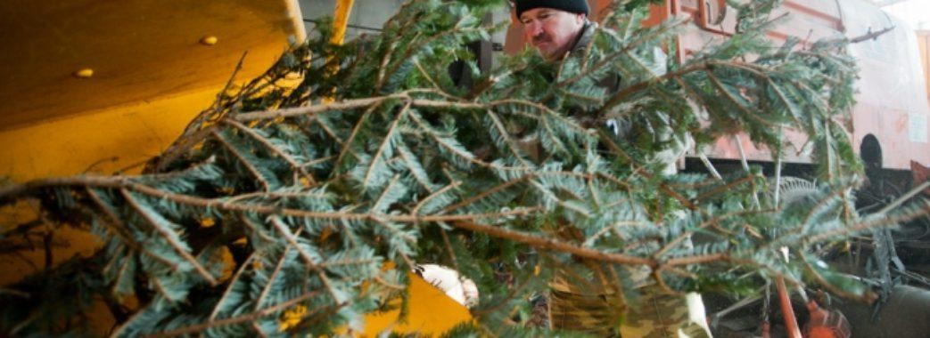 Львів'яни зможуть здати натуральні ялинки на утилізацію
