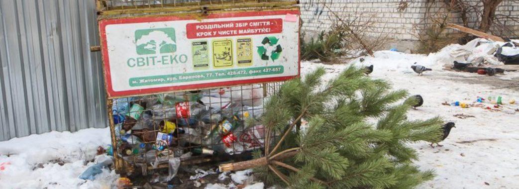 Здати ялинку та не нашкодити довкіллю можна у Львові