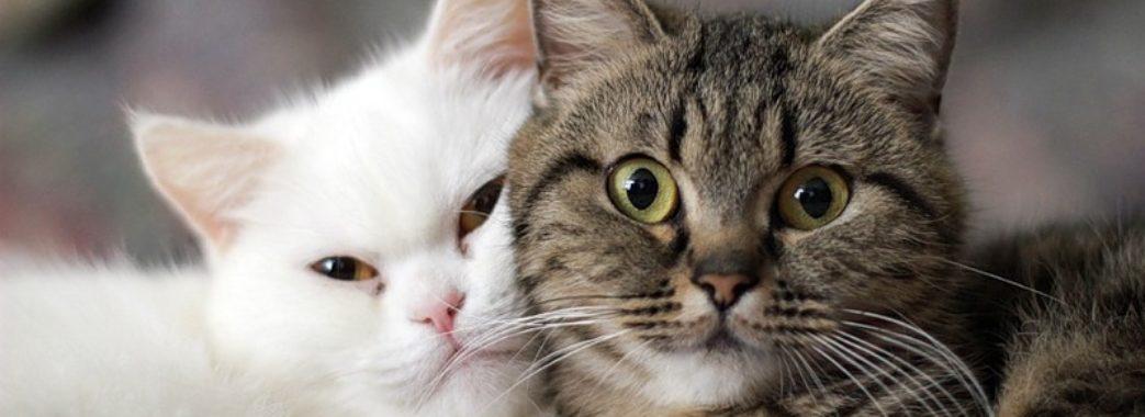 У Львові безпритульні коти потребують допомоги
