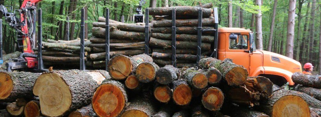 Легальність вирубки лісів можна буде перевірити через електронний квиток лісоруба
