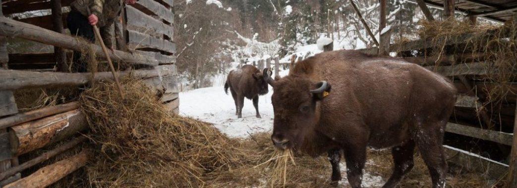 На Львівщині побудують вольєри для зубрів