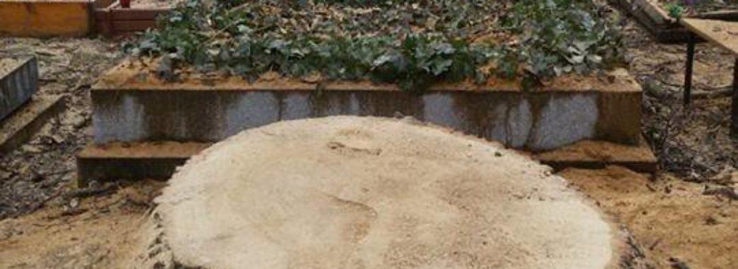 На цвинтарі у Жовкві зрізали дерева