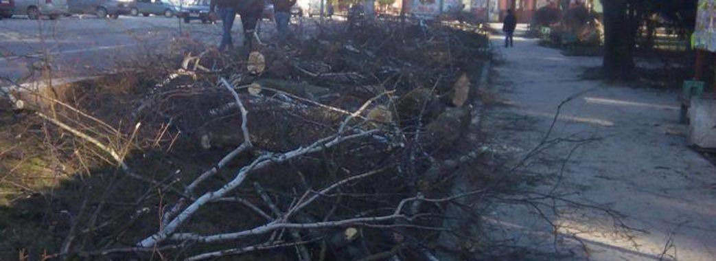 У центральному сквері Городка під корінь вирубують берези