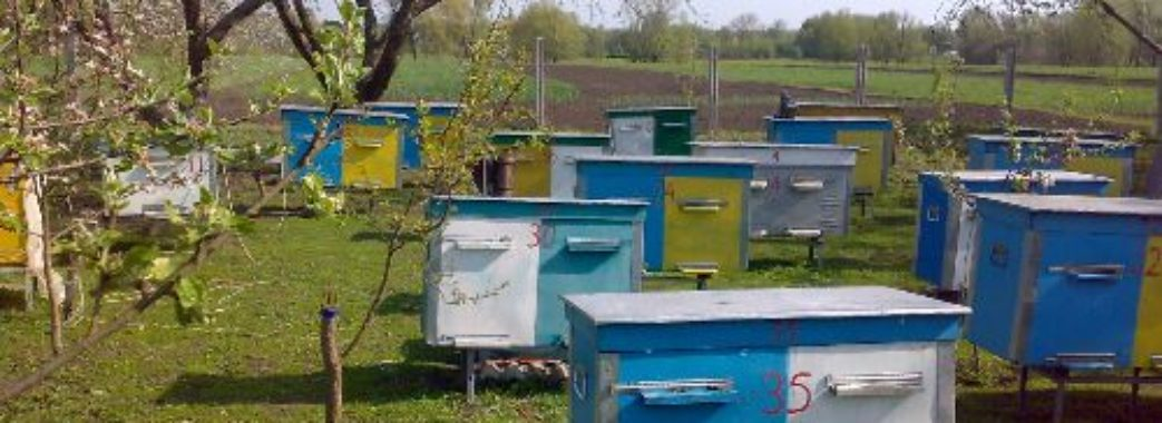 На Золочівщині пасічник пропонує тисячу доларів за інформацію про вулики