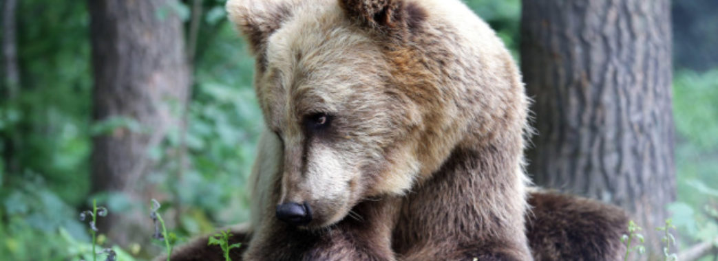 Де на Львівщині можна відвідати притулки з тваринами
