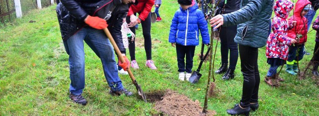 Дрогобиччанам роздадуть саджанці дерев для озеленення міста