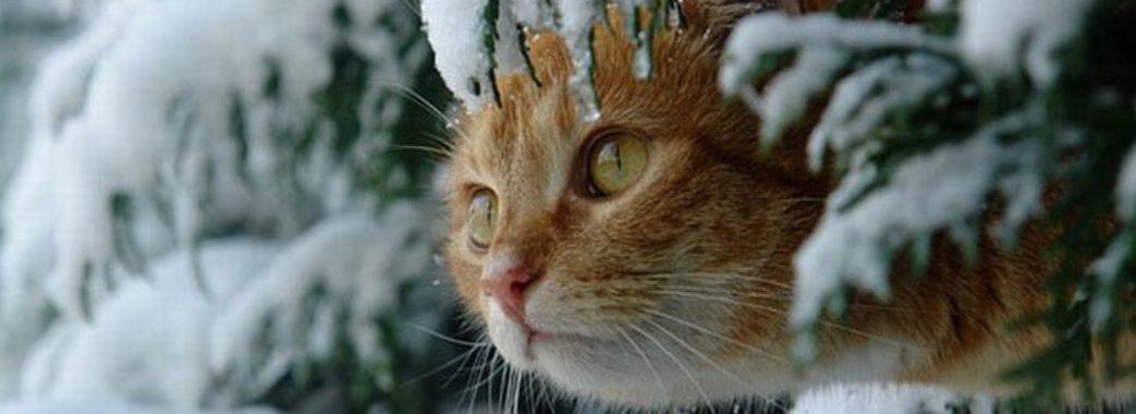 Сніг та дощ: на Львівщину йде різке похолодання