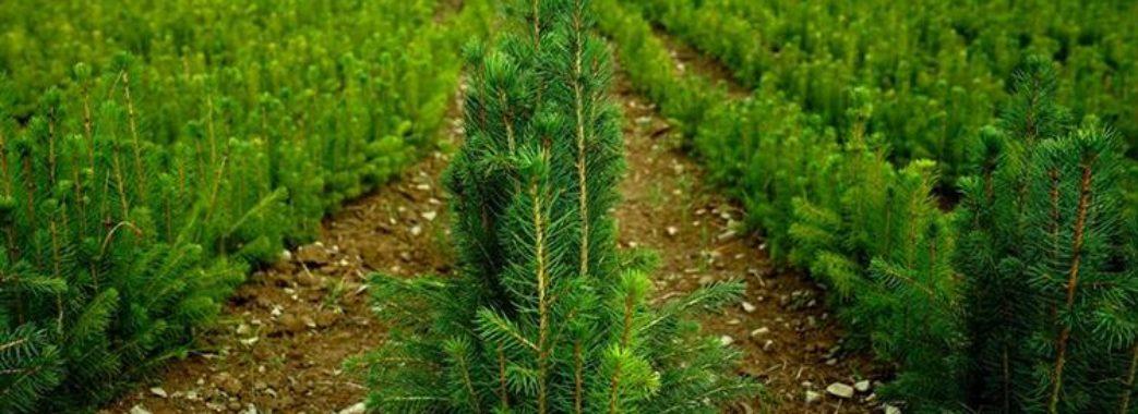 На Львівщині відтворять майже 2 тисячі гектарів лісів