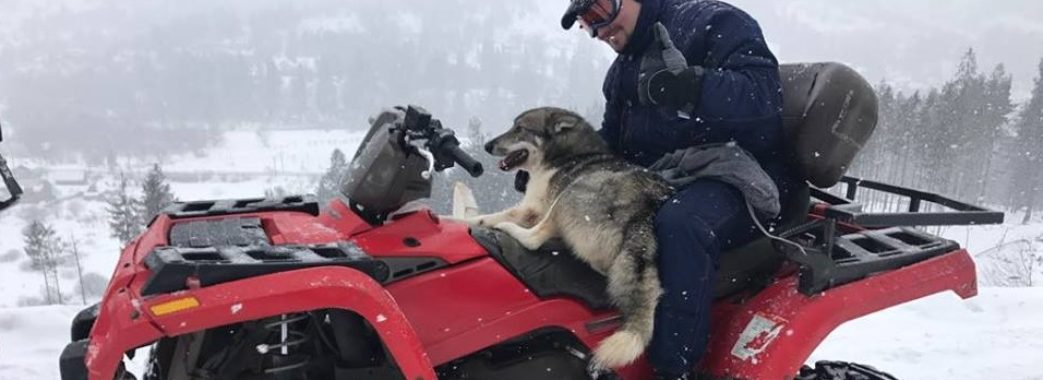 На Сколівщині собака з пораненою лапою врятував травмованого туриста