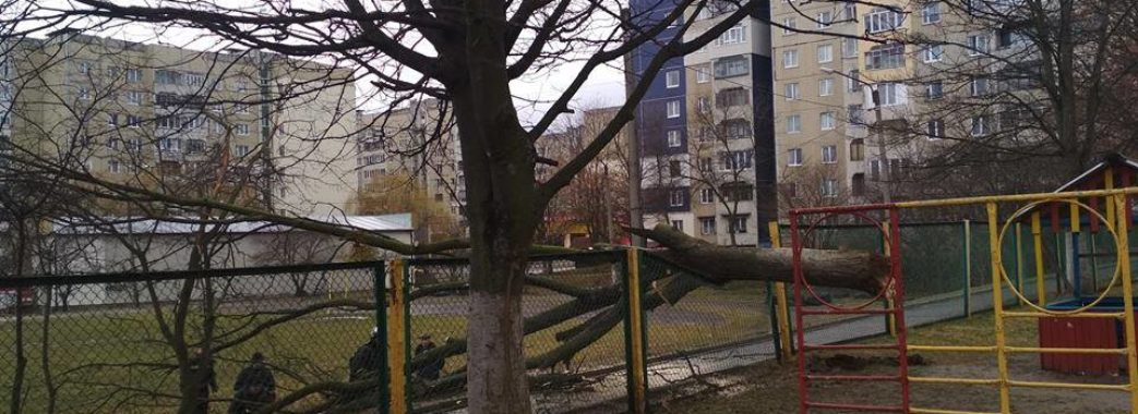 На Львівщині не вщухає сильний вітер