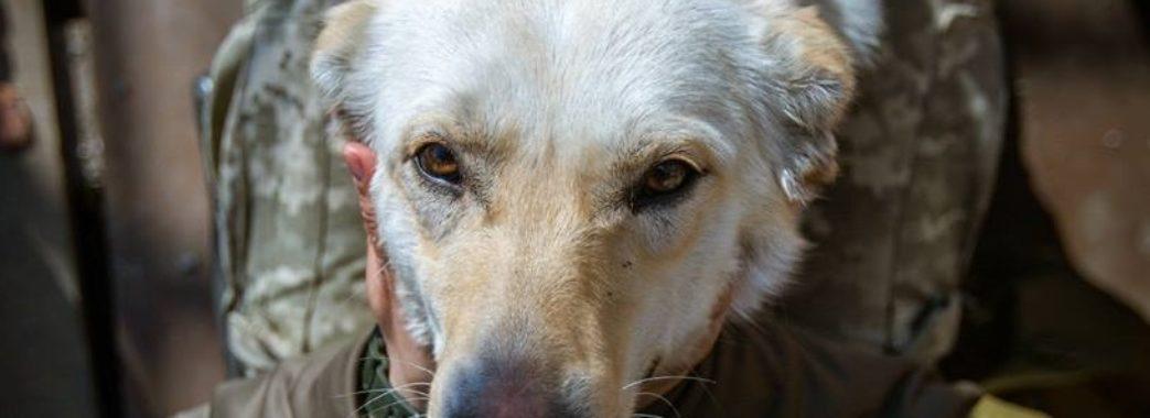 Собака з передової у Львові шукає господарів