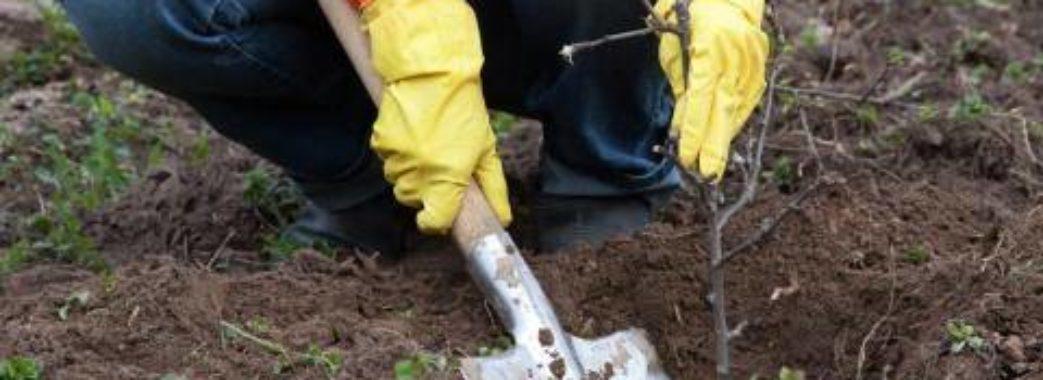 Григорій Душний зі Старого Самбора роздає саджанці дерев