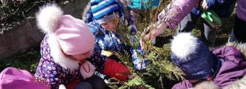 Дошкільнята Старого Самбора посадили дерево миру