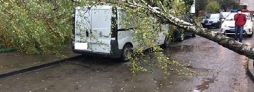 На Львівщині вітер повалив дерева та розірвав електричні мережі