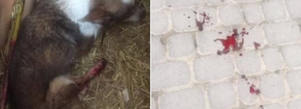Львів'янину, який стріляв у собаку, загрожує кримінал