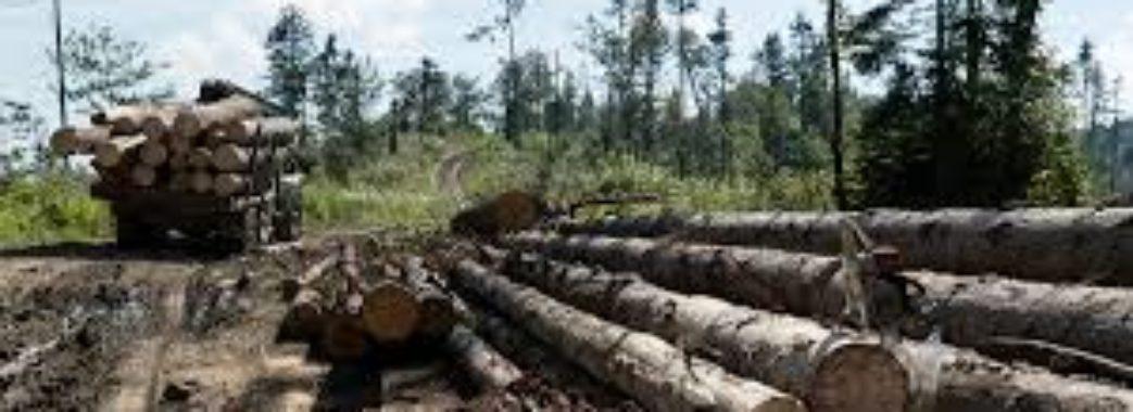 «Проект про заборону рубок у лісах – фейк від обласної ради», – громадський активіст Василь Курій
